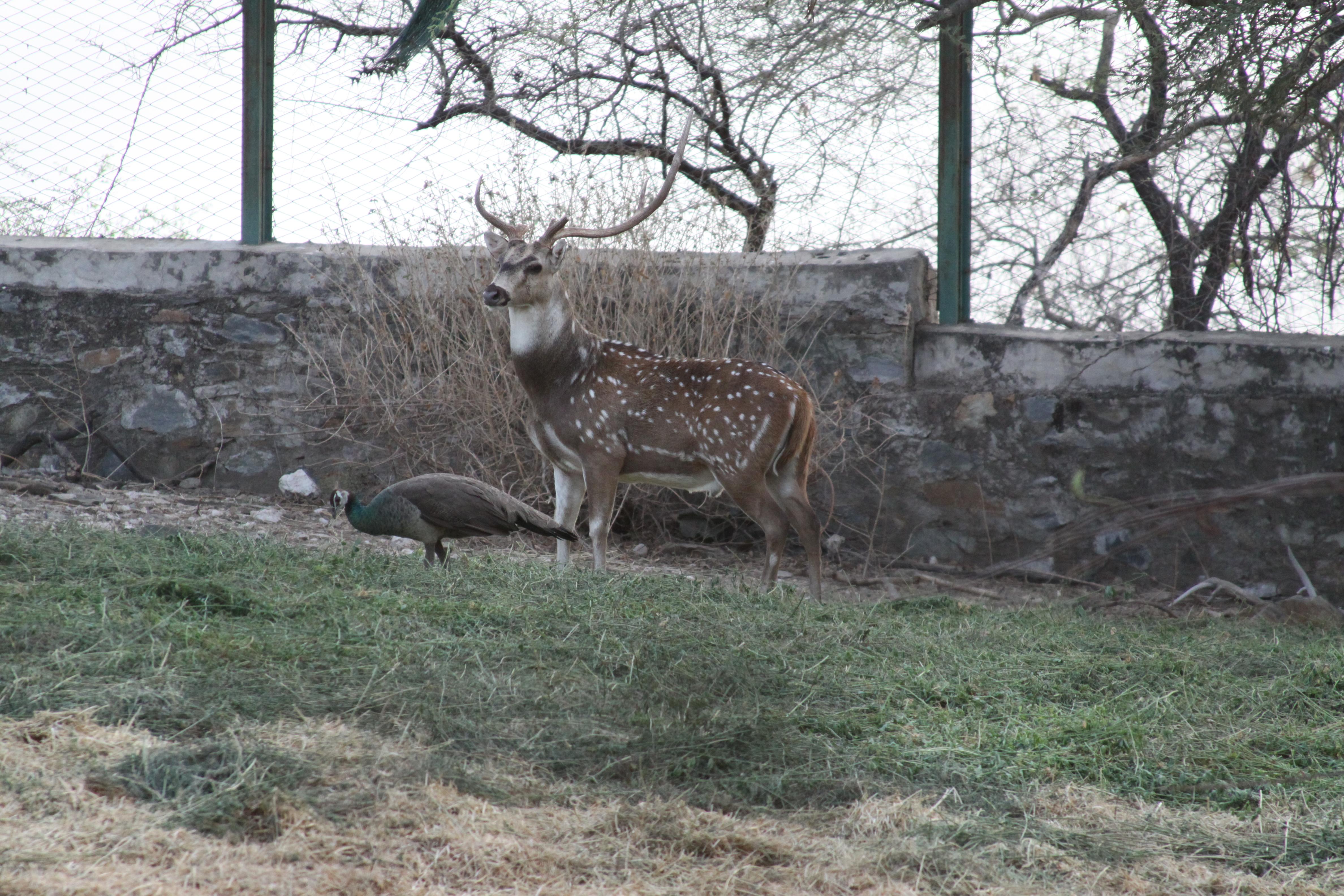 Oberoi Animals