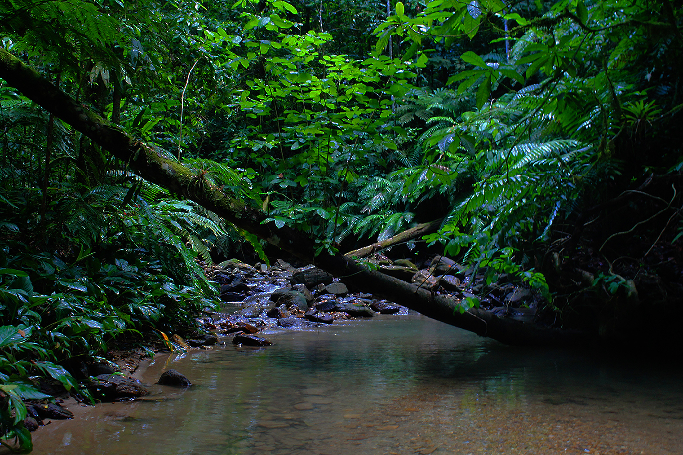 Forestry | Water Systems