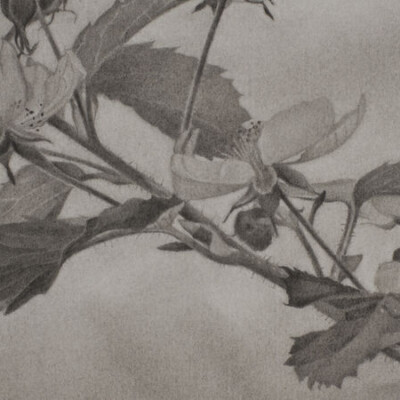 Garvey | Simon presents Mary Reilly: Nature of Vermont