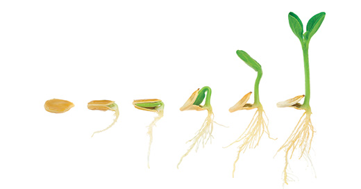 How to grow plants with stronger stems, roots and blooms using coir as a soil conditioner