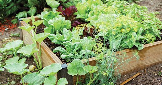 Five benefits of using coir for growing in your urban garden
