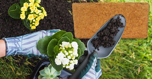 Growing plants with coco peat: dos and don'ts