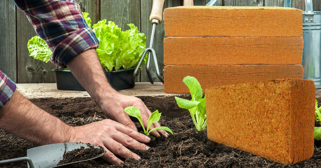 Coir peat or peat moss for growing