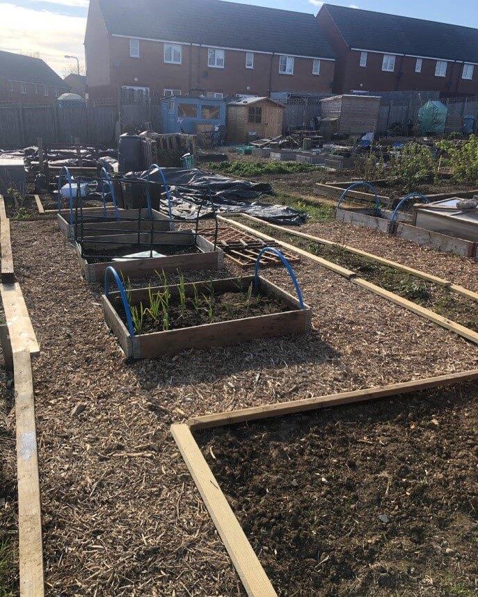 Look after your soil - Chloe's garden