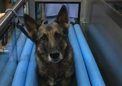 Splash Paws Canine Hydrotherapy in Kent & East Sussex