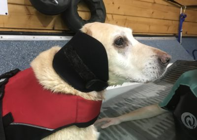 Splash Paws Canine Hydrotherapy Kent