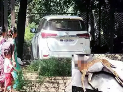 मुंबई: सांसद की कार ने हिरण को कुचला, ड्राइवर के खिलाफ केस दर्ज