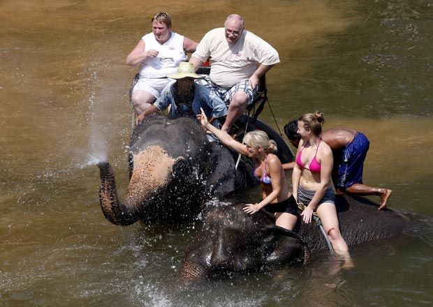 Comercio turístico de elefantes en Birmania