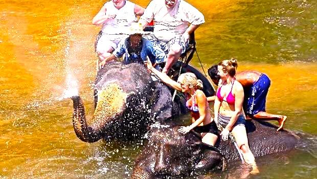 Comercio turístico de elefantes en Birmania (II)
