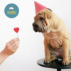 10 ways to show your dog you love them!