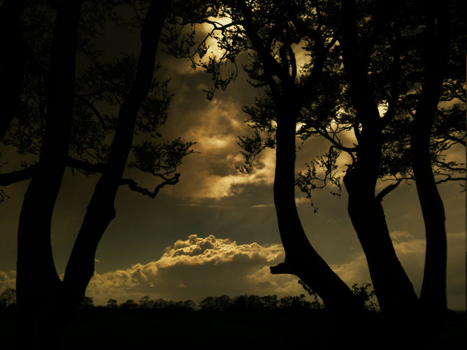 The Dark Hedges, Stranocum, Northern Ireland