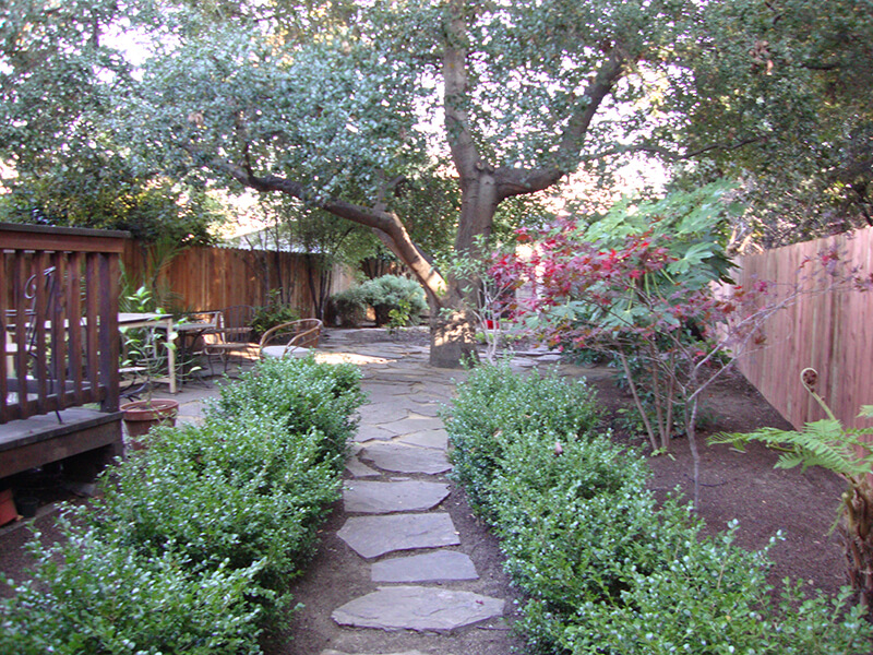 Protected Oakland Oak tree with flagstone and dg notice the space around the tree gets no water