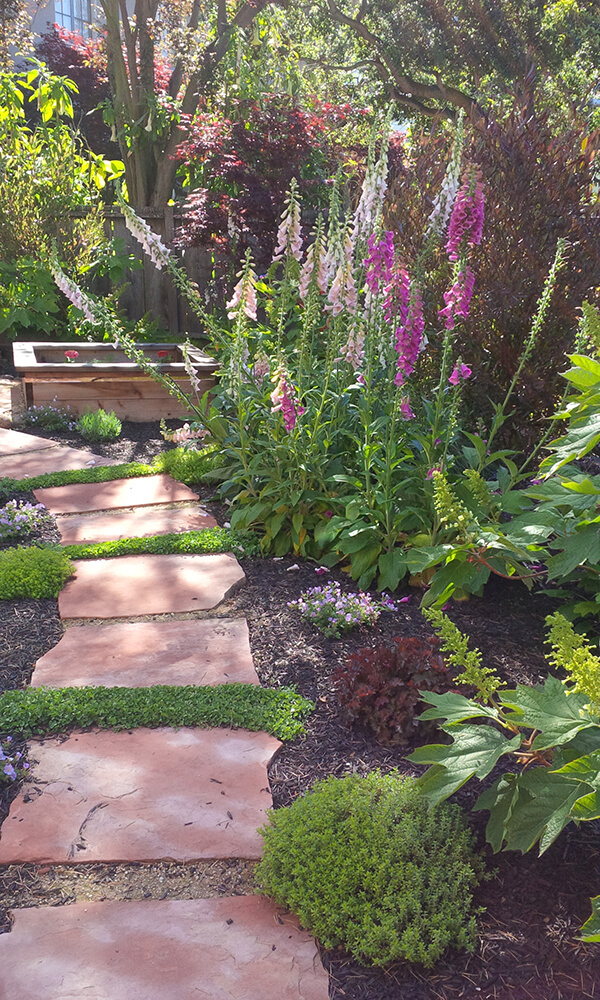 Arizona Rosa flagstone path with bountiful plants