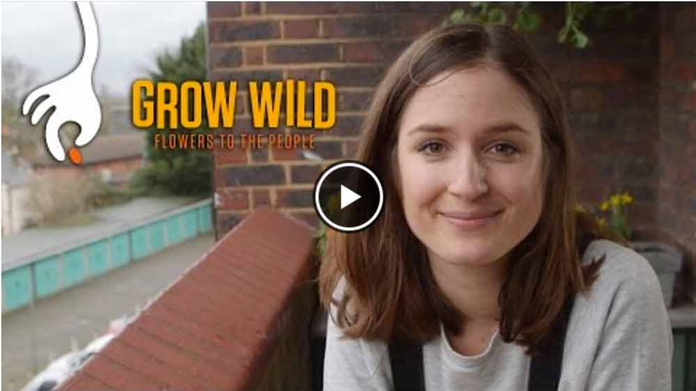 wild-flowers-video-image