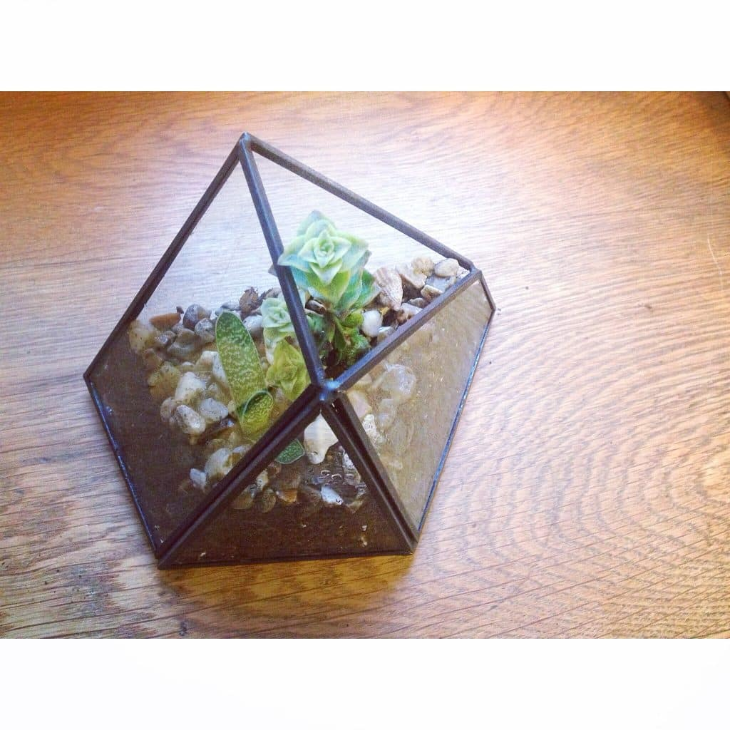 completed open terrarium