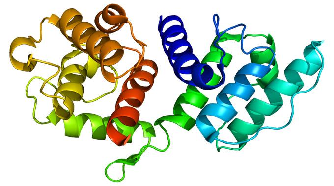 про гены и железо