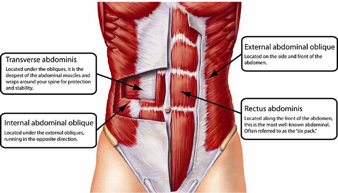 мышцы кора и становая тяга