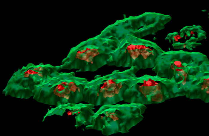 3D chemical map of HeLa cells