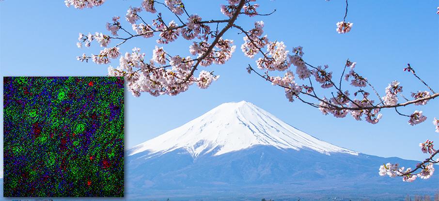 Cherry blossoms mount fuji