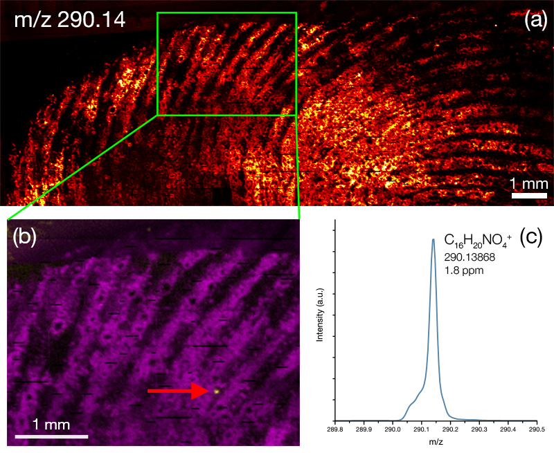 ToF SIMS image of cocaine metabolite BZE in a fingerprint.
