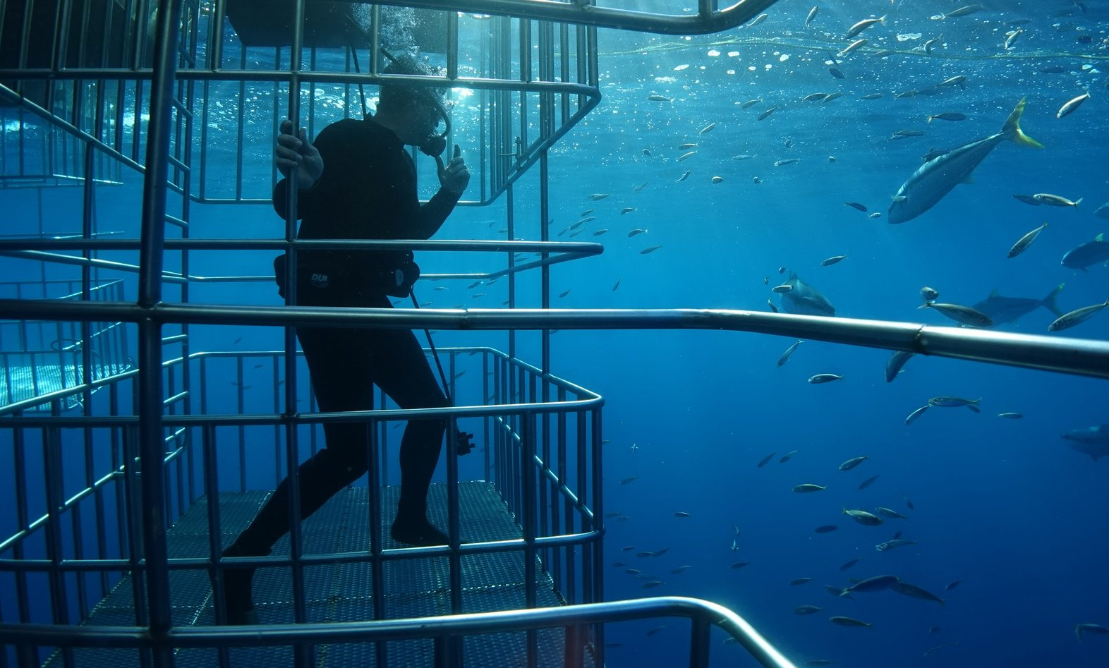 Shark diving extreme travel trend