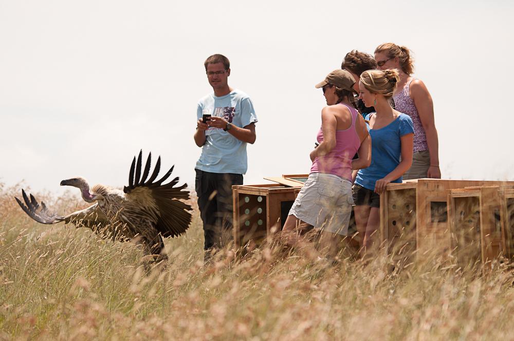 Voluntourism with vultures