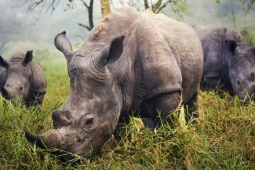 Voluntourism save the rhinos