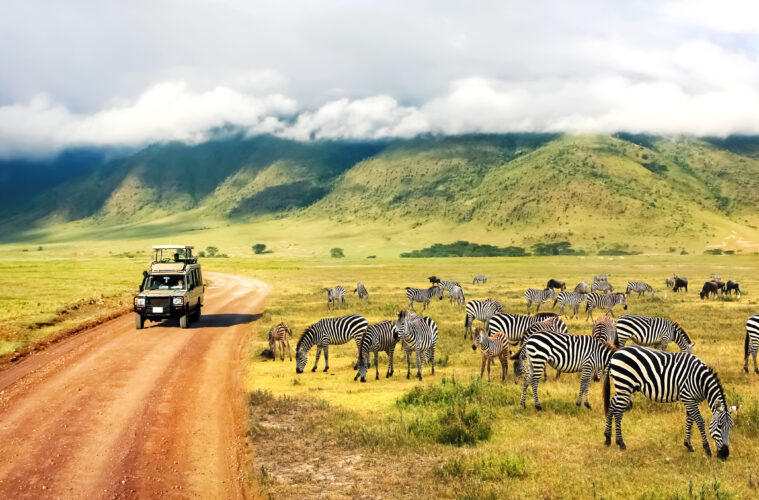 Safari in Africa with zebra