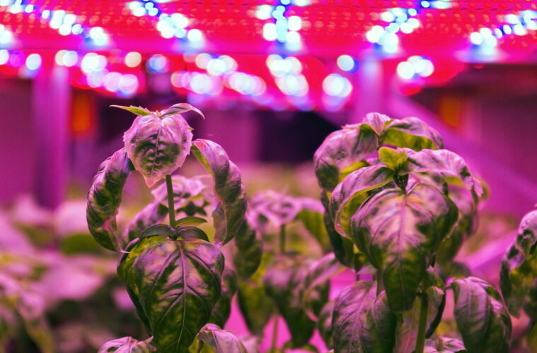 Vertical salad farm