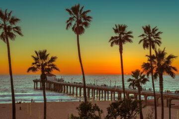 Palm trees at Manhattan Beach at sunset