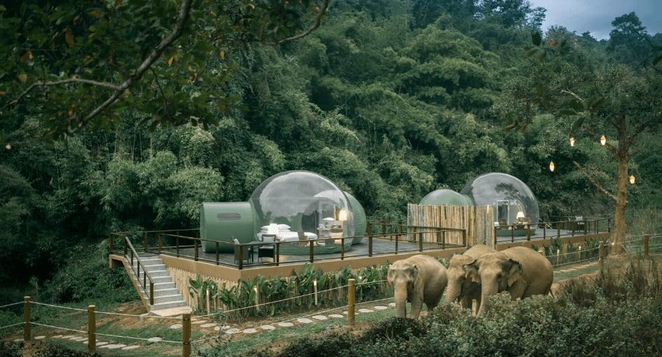 Anantara Jungle Bubbles, Thailand