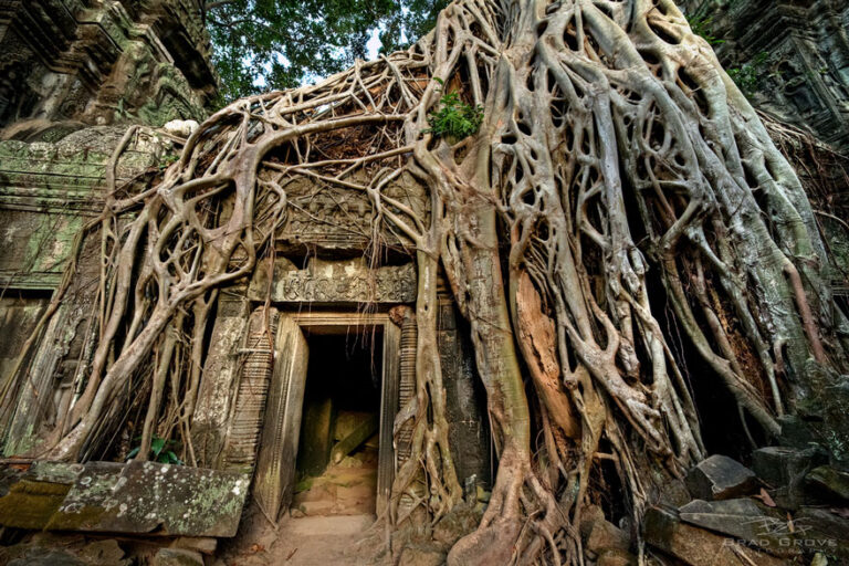 Prikaz snage prirode drvetom koje raste preko hrama