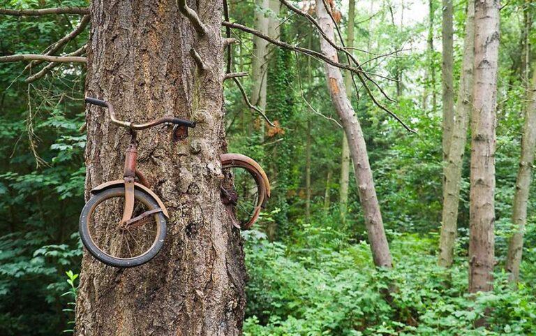 Prikaz snage prirode drvetom koje raste preko bicikla
