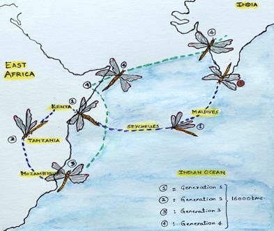 Migration Map of Global Skimmers: By Anjan Prakash
