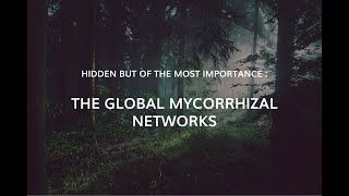 Global mycorrhizal fungi networks: untangling the wood wide web.