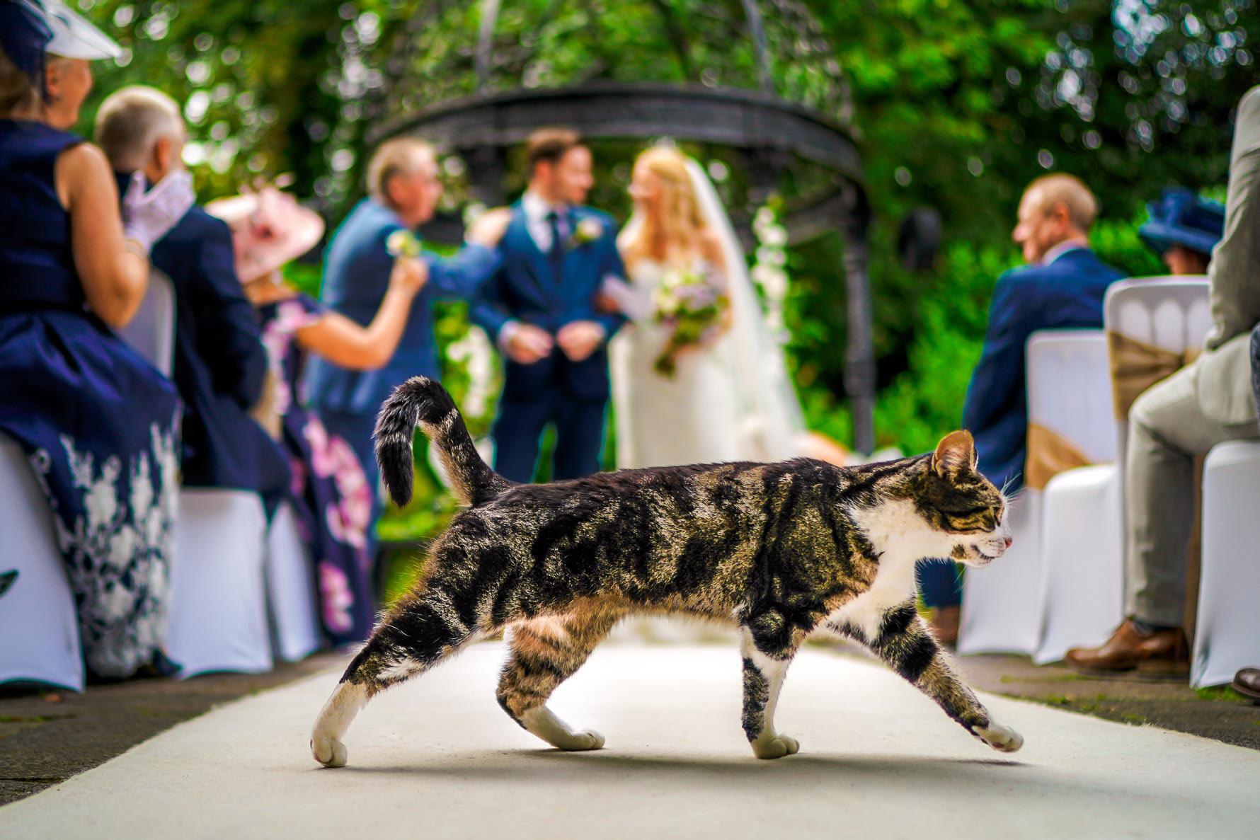 cat wedding photo