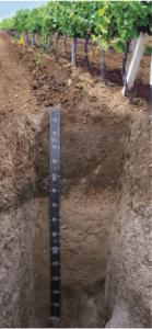Lepovo Vineyard Soil for Red Wine White Wine Terroir