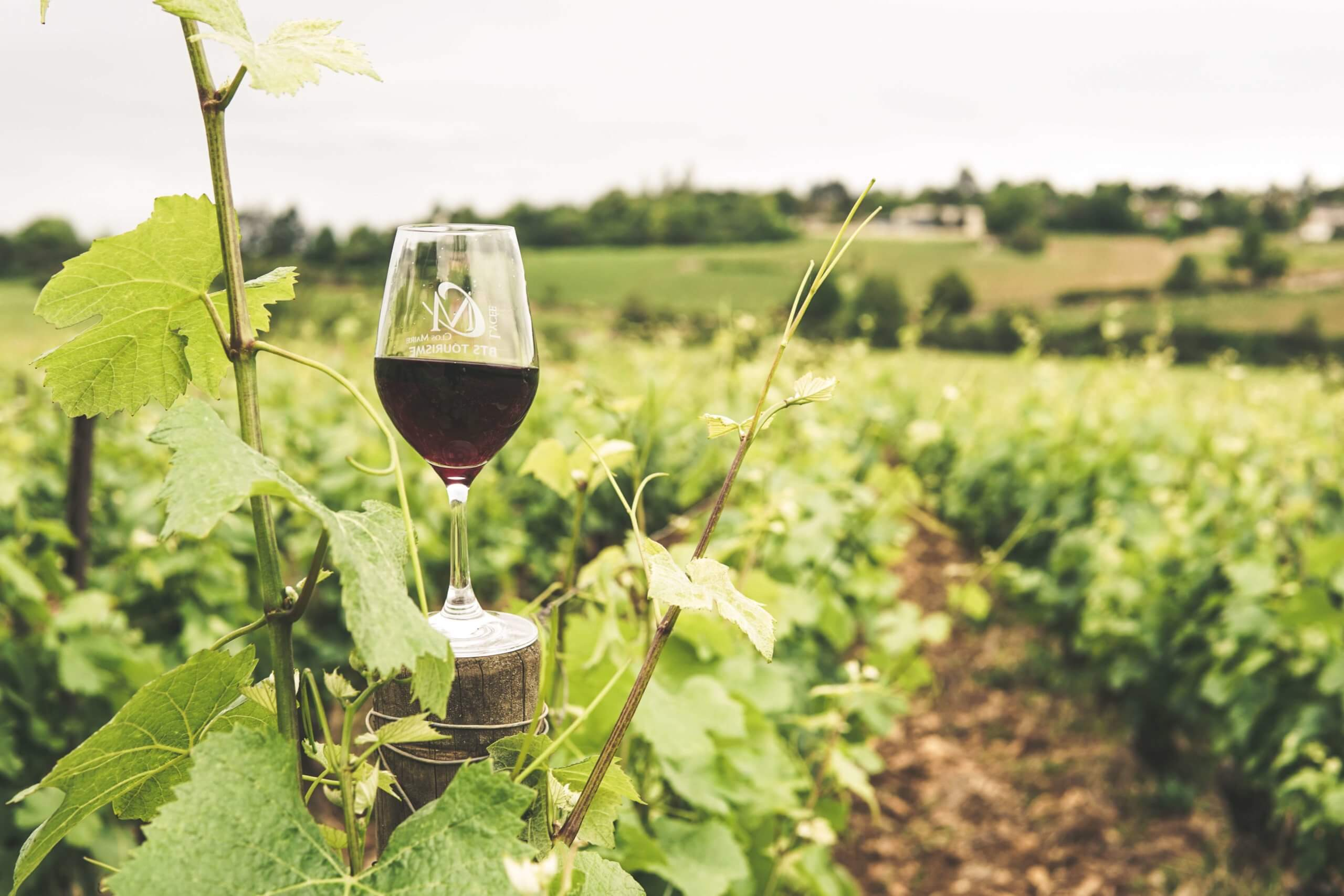 Red wine in vineyard for health