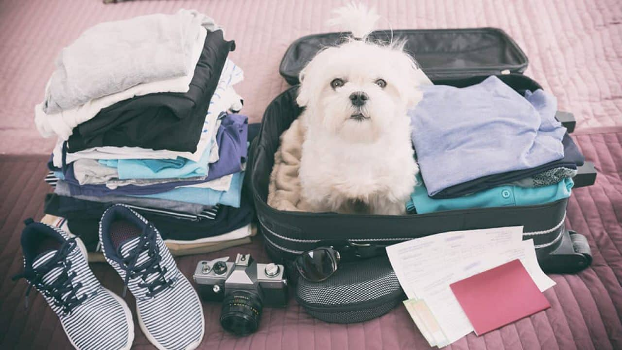 Post-Brexit Pet Travel Guide for Owners