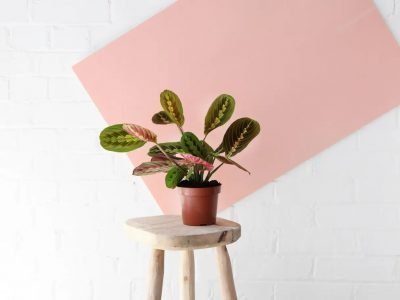 20 pledges: The plastic-free house plant and gardening brands I've found