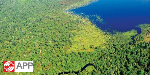 Asia Pulp & Paper Unveils Forest Monitoring Dashboard to Tackle Deforestation and Forest Fires
