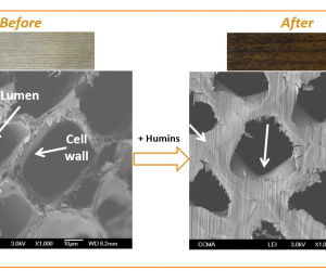 Avantium grants Kebony rights to use its patented technologies on humins for wood modification