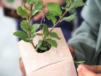 Pro Carton supports National Tree Week with its Trees into Cartons, Cartons into Trees (TICCIT) at Home initiative