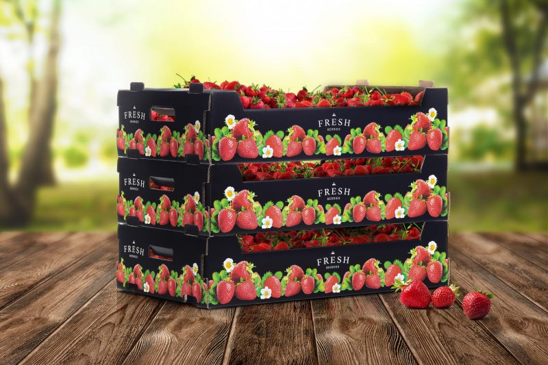 New corrugated berry packaging complements premium strawberries with top quality print