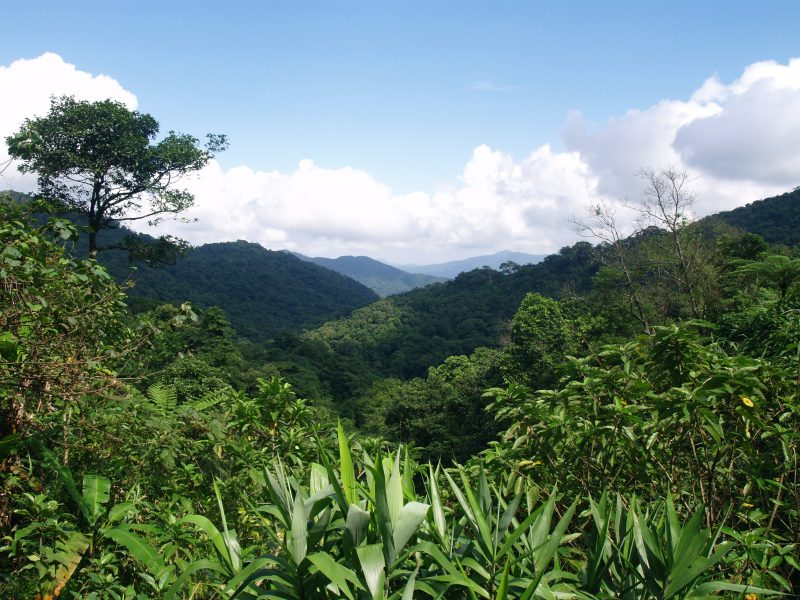 Antalis and their Customers Protect 1,190 Acres of Threatened Tropical Forest