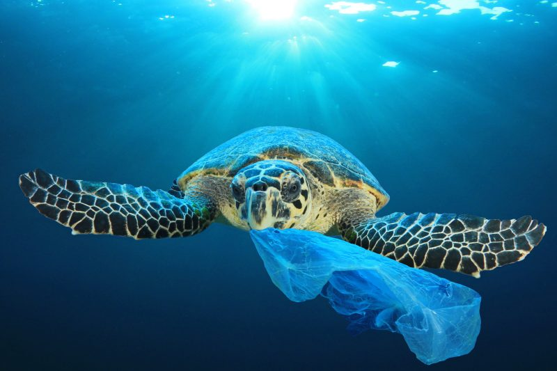 Evertis has joined the business call for a UN treaty on plastic pollution