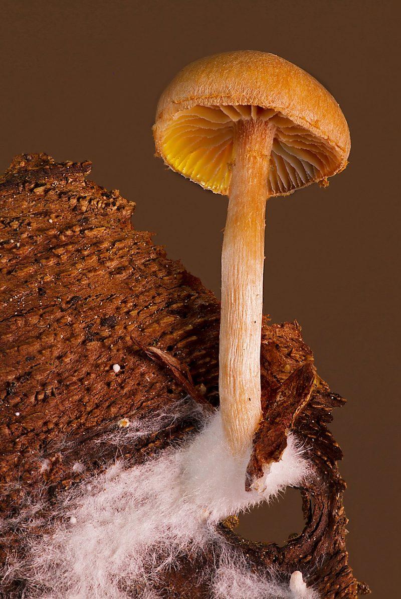 Using mushrooms to make packaging materials