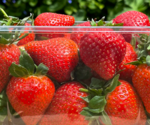 Waddington Europe and Produce Packaging Start the Switch To 100% rPET Containers