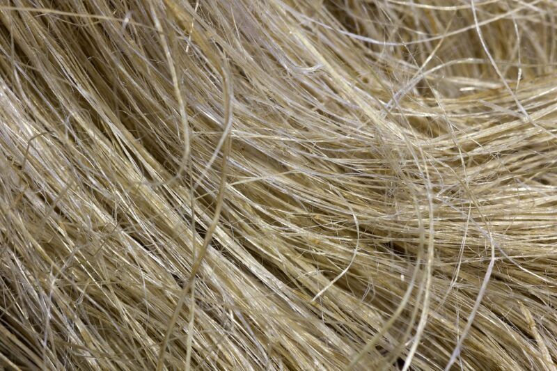 Packaging the benefits of wood and hemp