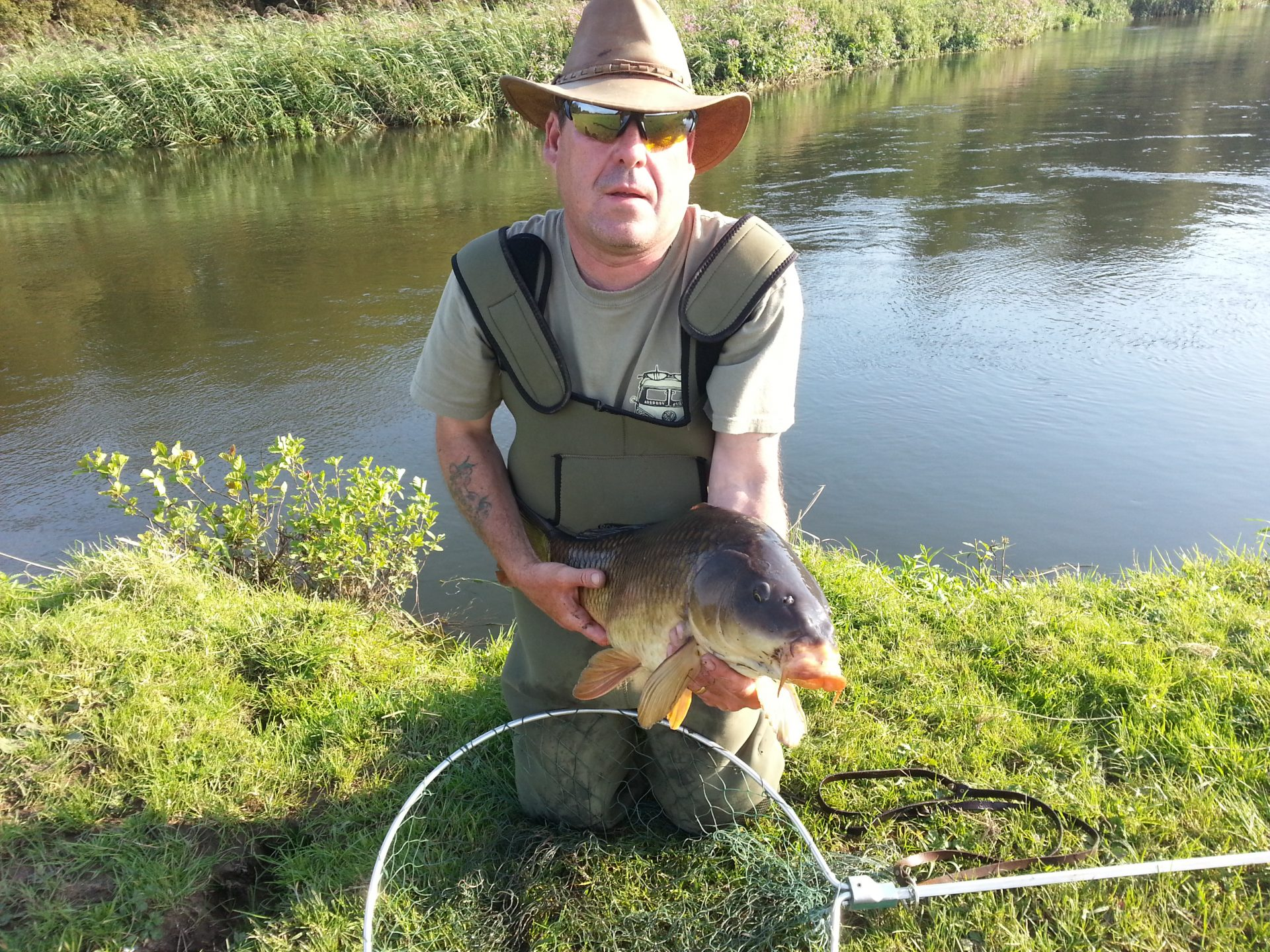 A lovely 20lb river caught Common Carp